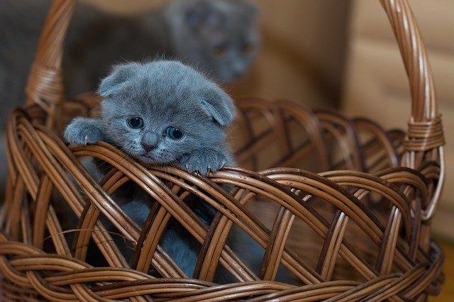 hnědý proutěný košík s koťátkem